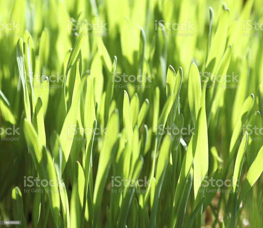 green gras stock photo