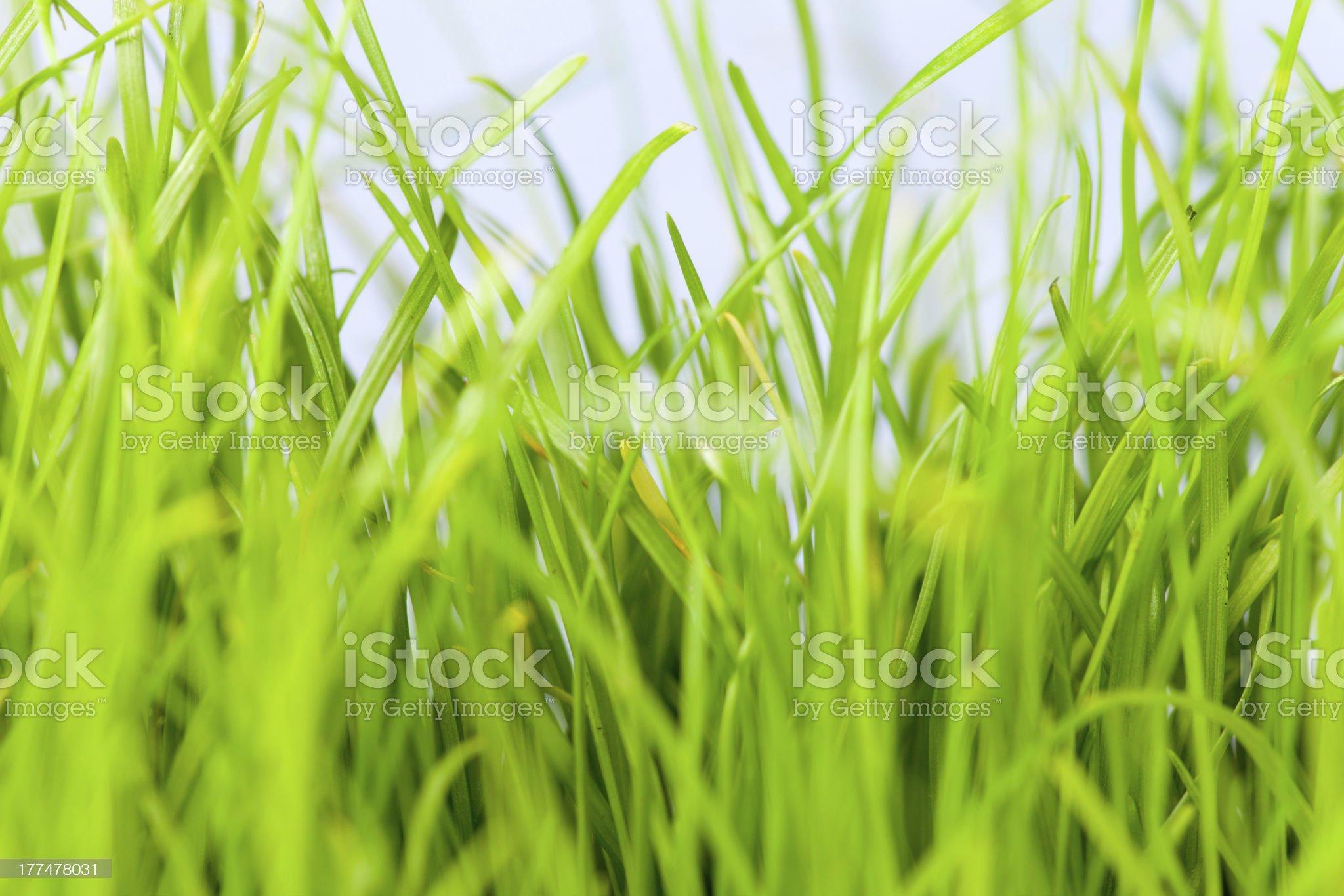 green gras royalty-free stock photo