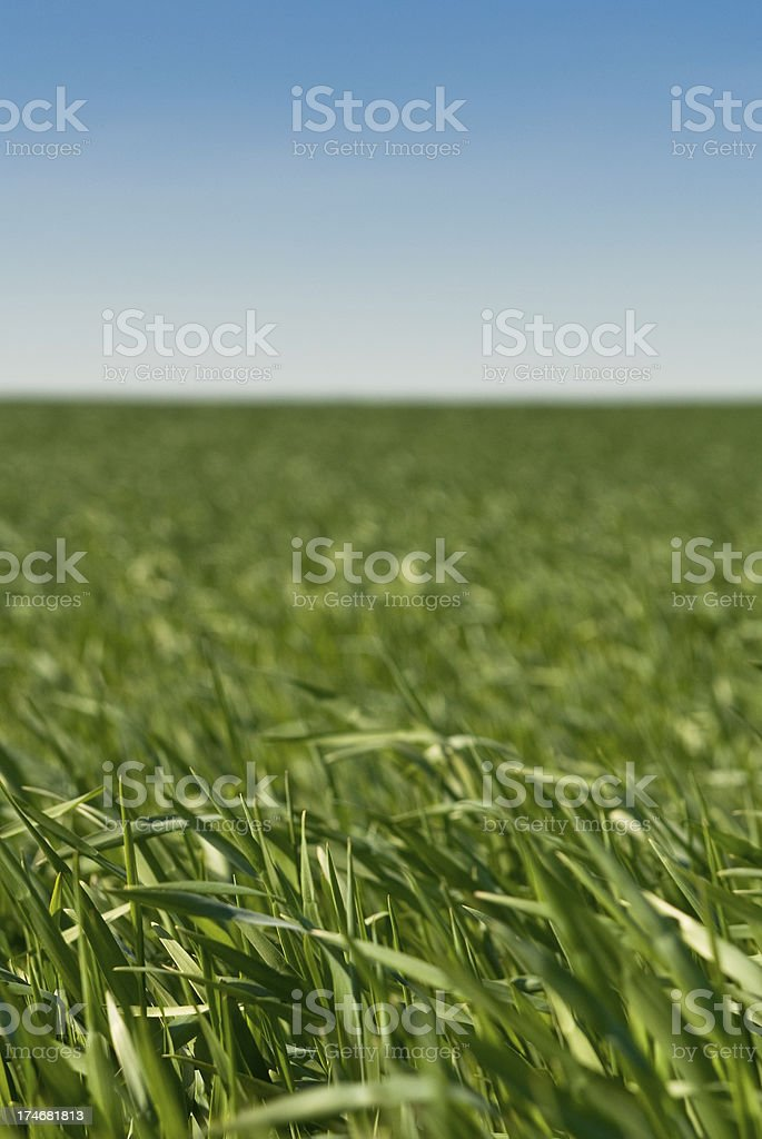 Green gras with a blue sky stock photo
