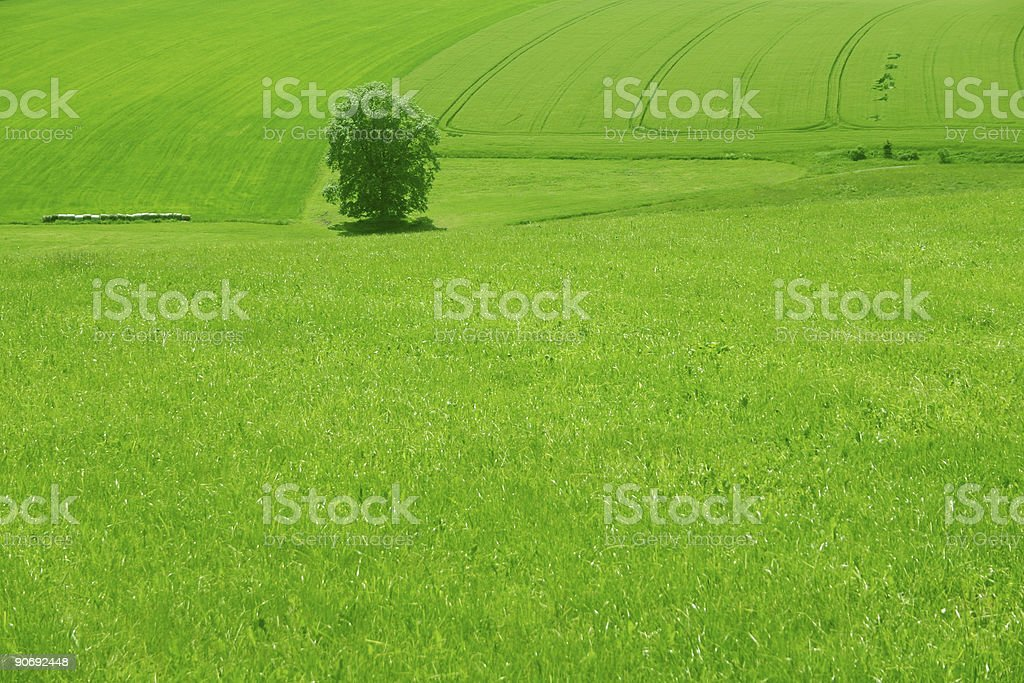 green grasland royalty-free stock photo