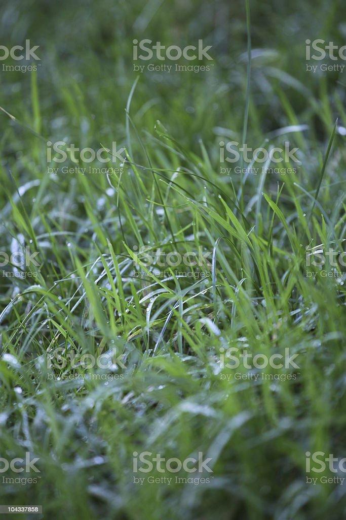 緑の芝生の後に rain-被写界深度が浅い ロイヤリティフリーストックフォト