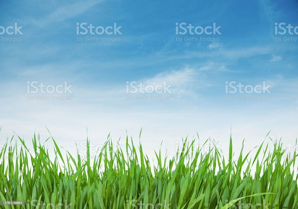 Green grass and blue sky (70 mpx) royalty-free stock photo