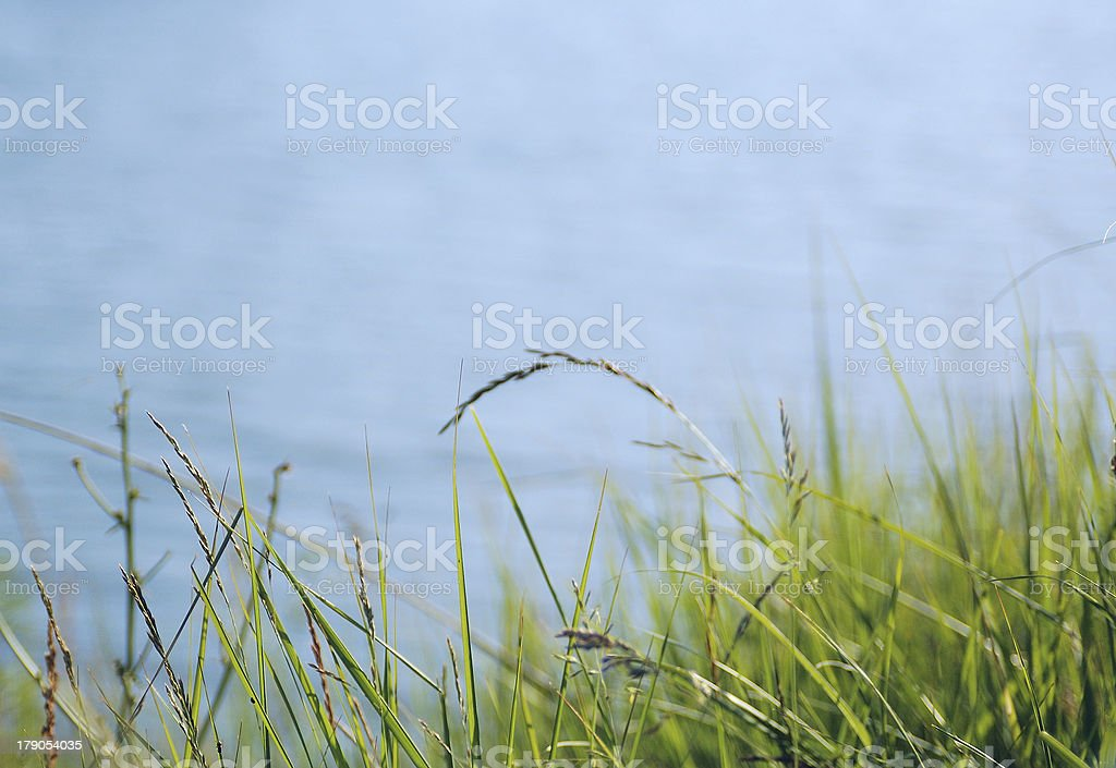 Green Grass and Blue Water royalty-free stock photo