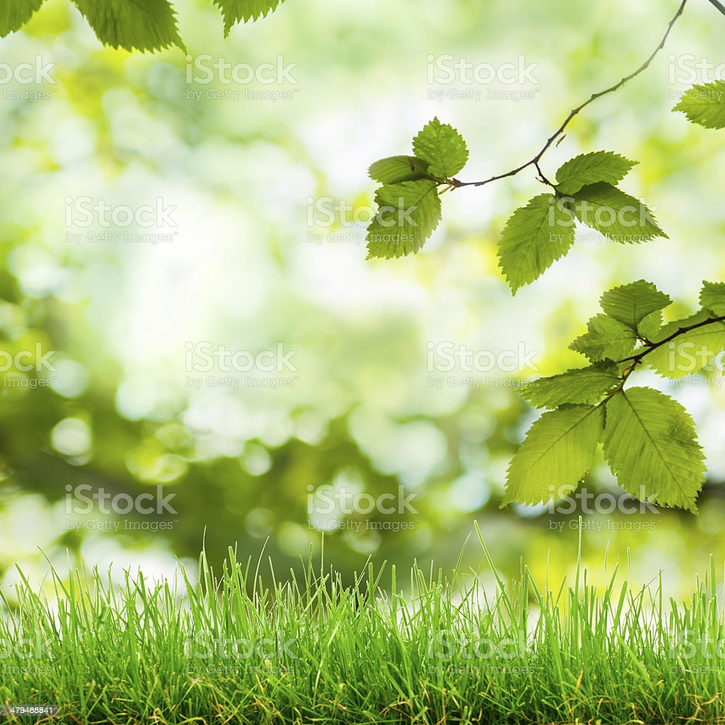 green grass and bokeh lights stock photo