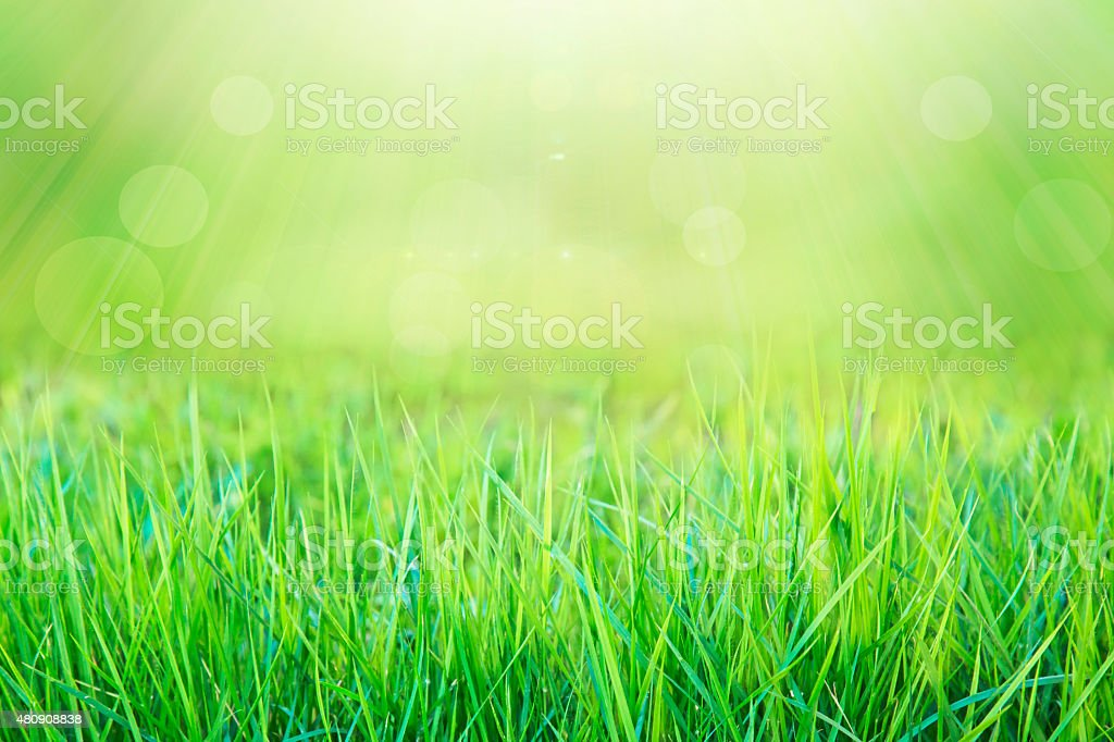 green grass and bright spring in sunlight with bokeh background stock photo