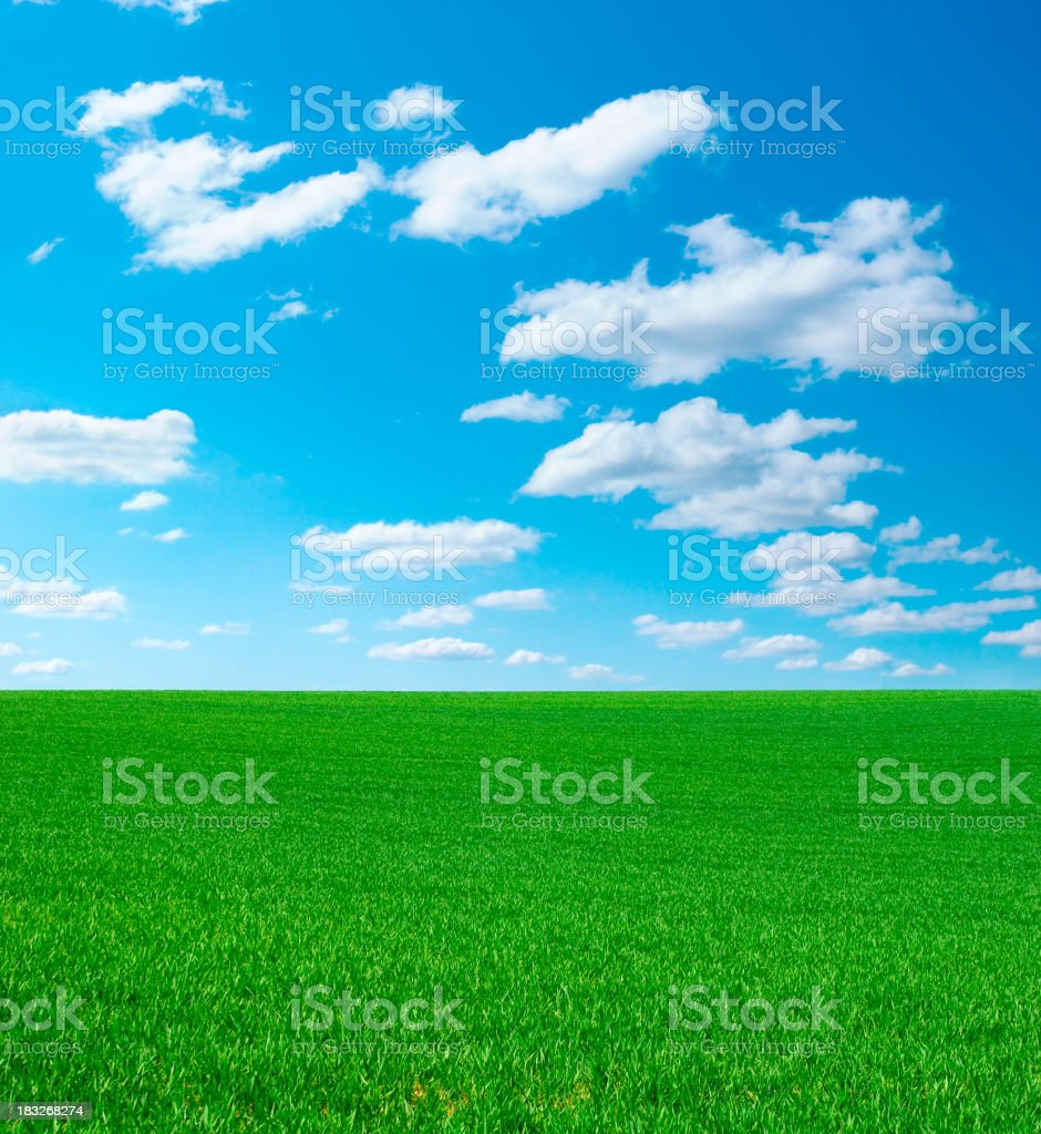Green grass and cloudy sky royalty-free stock photo