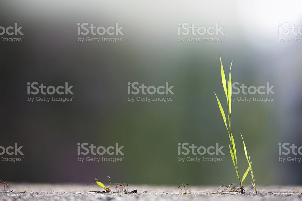 Green grass and concrete stock photo