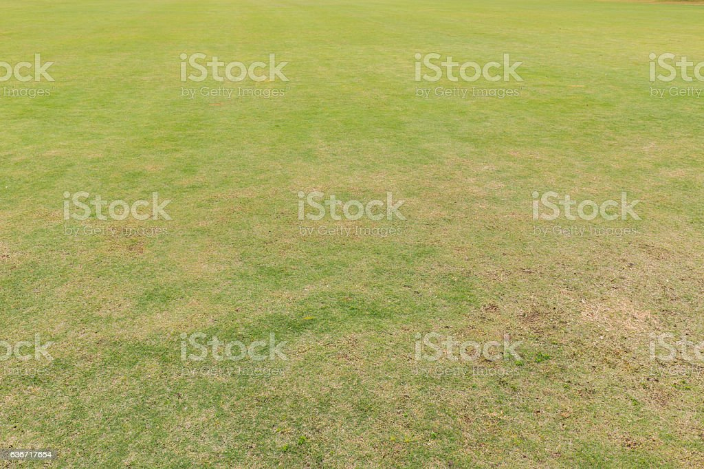 green grass and dry grass in park stock photo