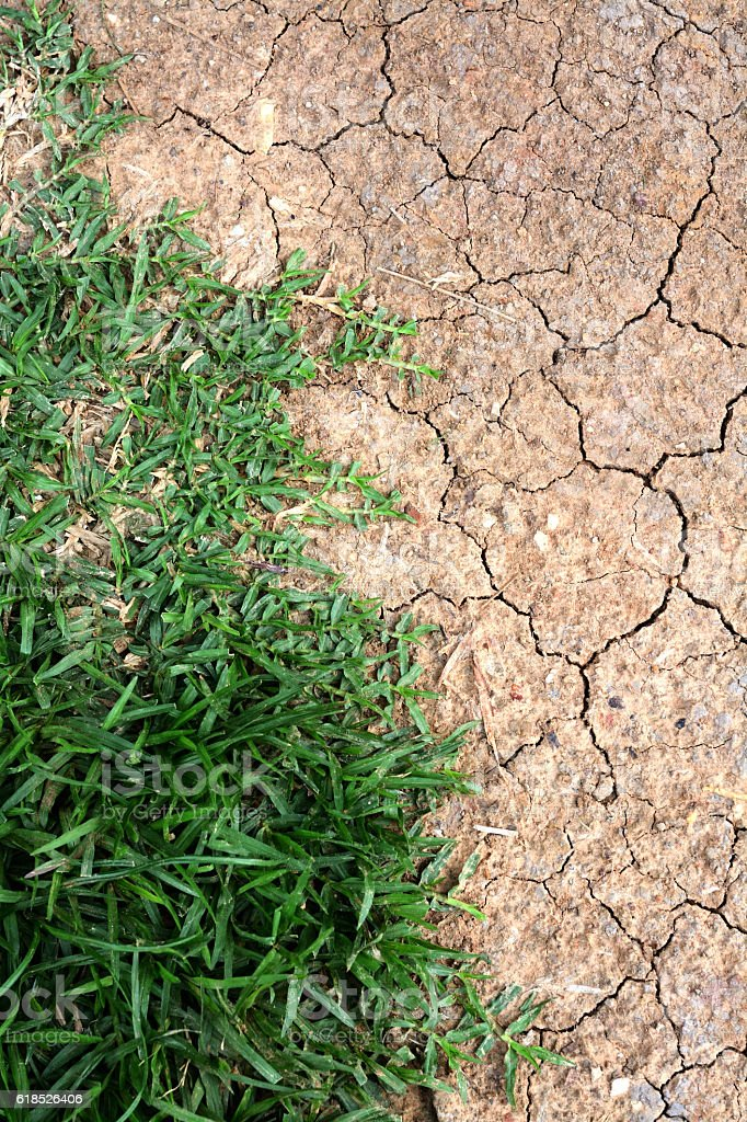 green grass and dry land stock photo
