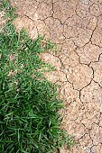 green grass and dry land