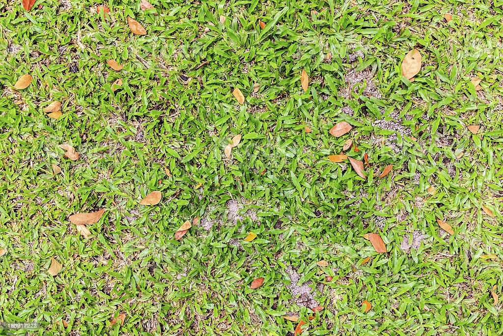 Green grass and dry leaves on ground royalty-free stock photo