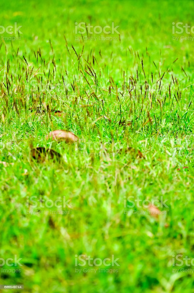 Green grass and dry leaves on the field stock photo