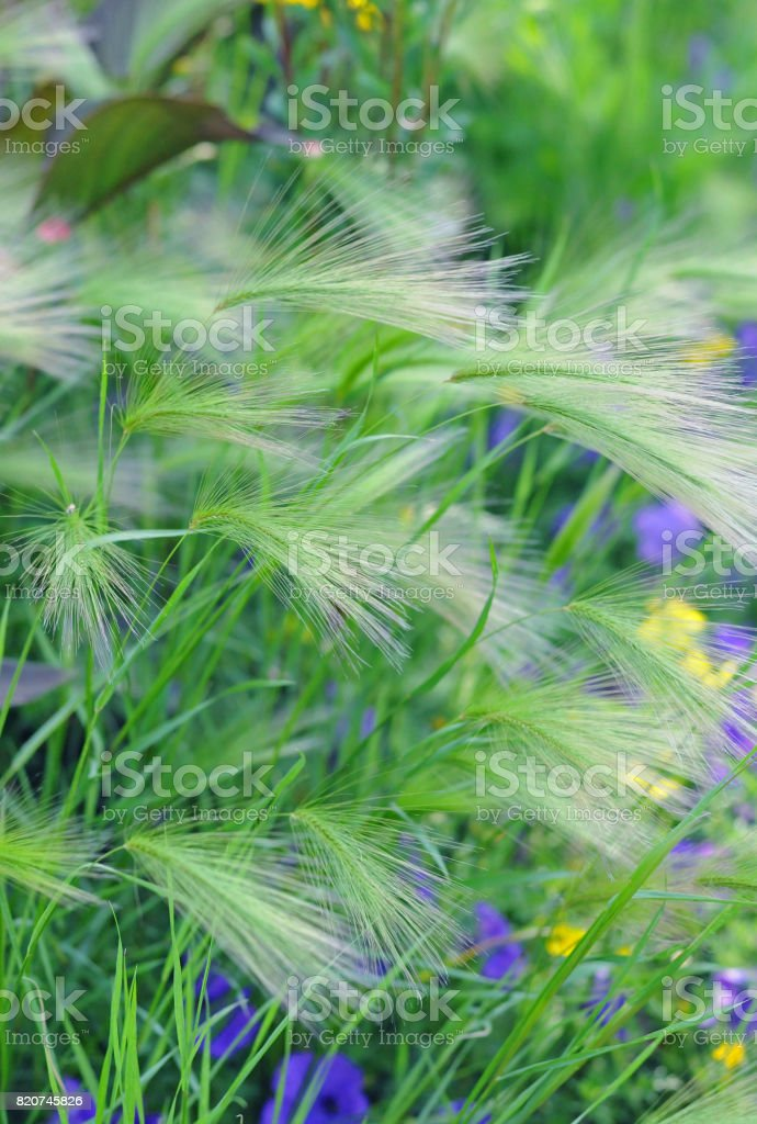Green grass and  flower s stock photo