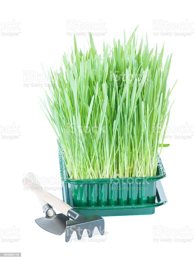 Green grass and garden tools stock photo