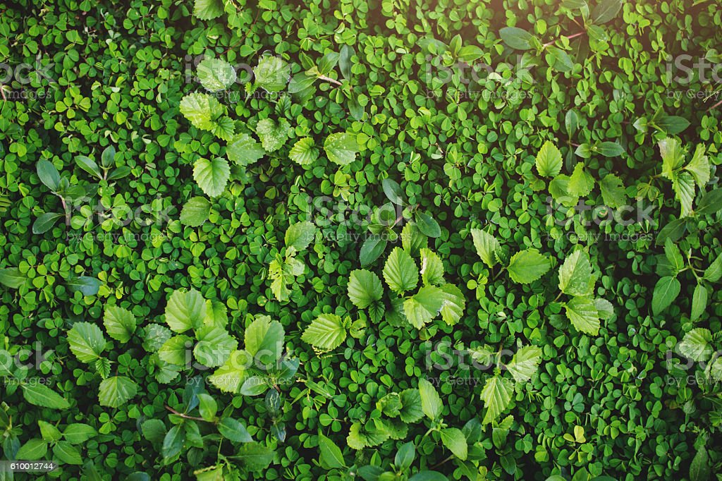 Green grass and leaf texture background in spring or summer stock photo