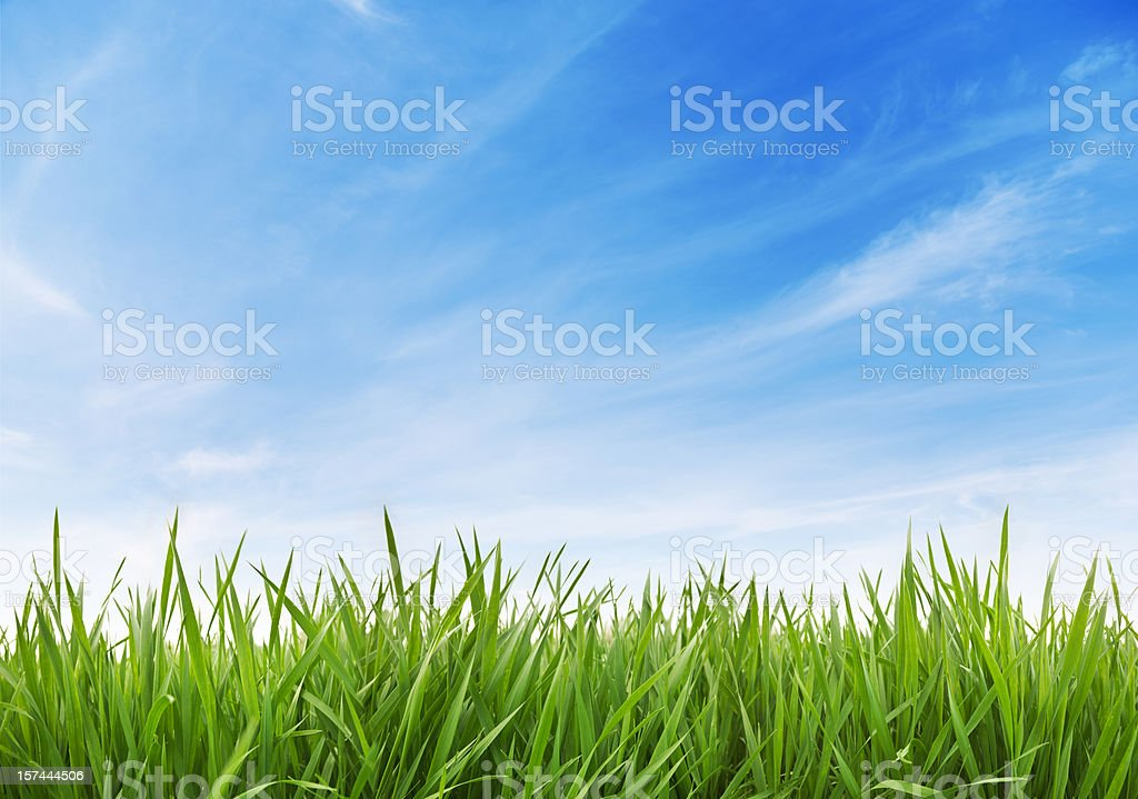 Green Grass and sky XXXL 70 mpx stock photo