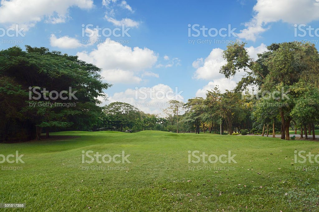 Green grass and trees in public park stock photo