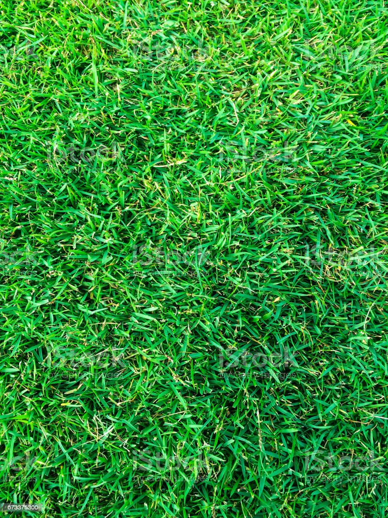 green grass at soccer pitch or football  field stock photo