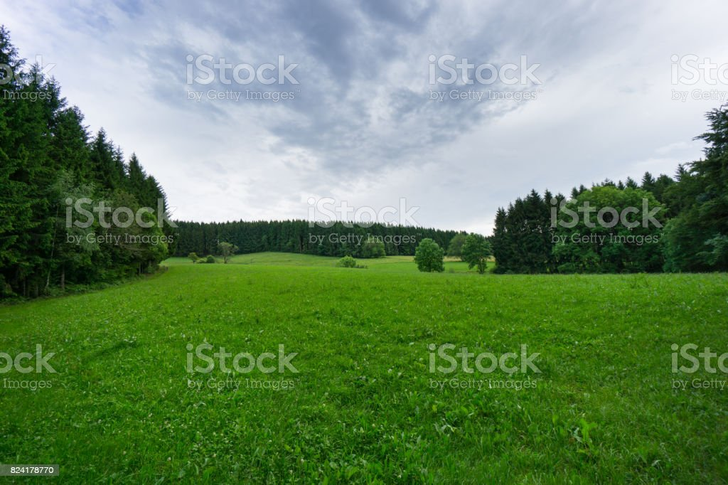 Green grass between black forest trees with upcoming thunderstorm