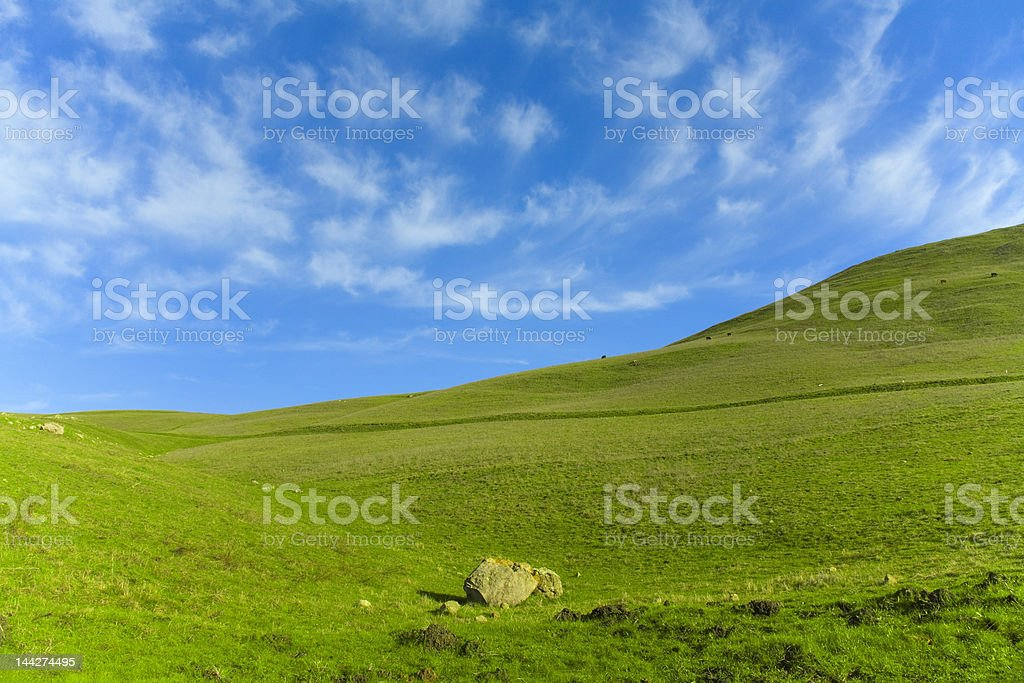 Green Grass Blue Sky royalty-free stock photo