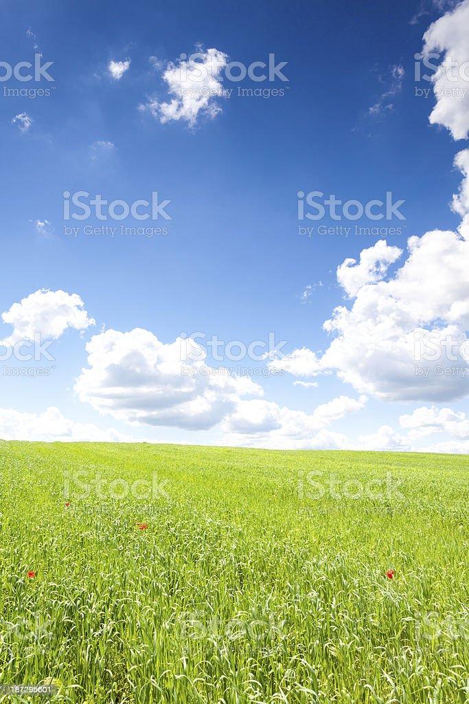 Green grass blue sky royalty-free stock photo