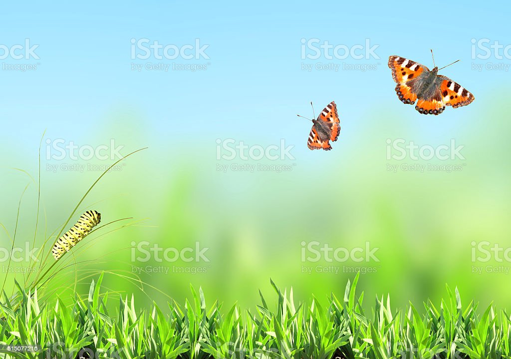 Green grass, caterpillar and butterfly stock photo