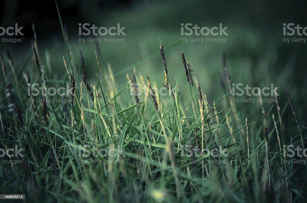 green grass close up stock photo