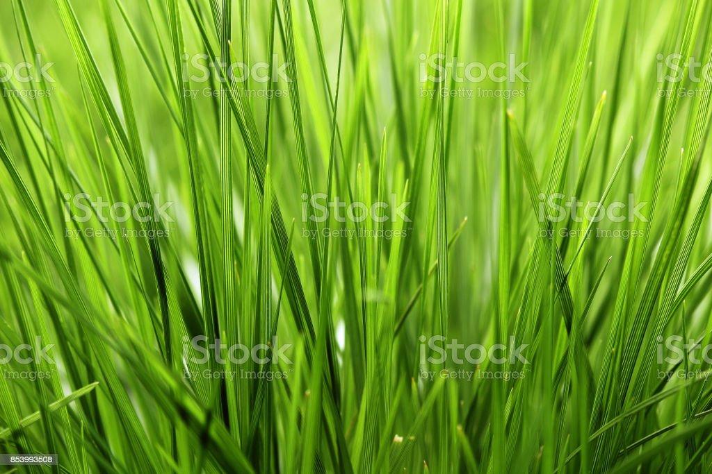 Green grass closeup stock photo
