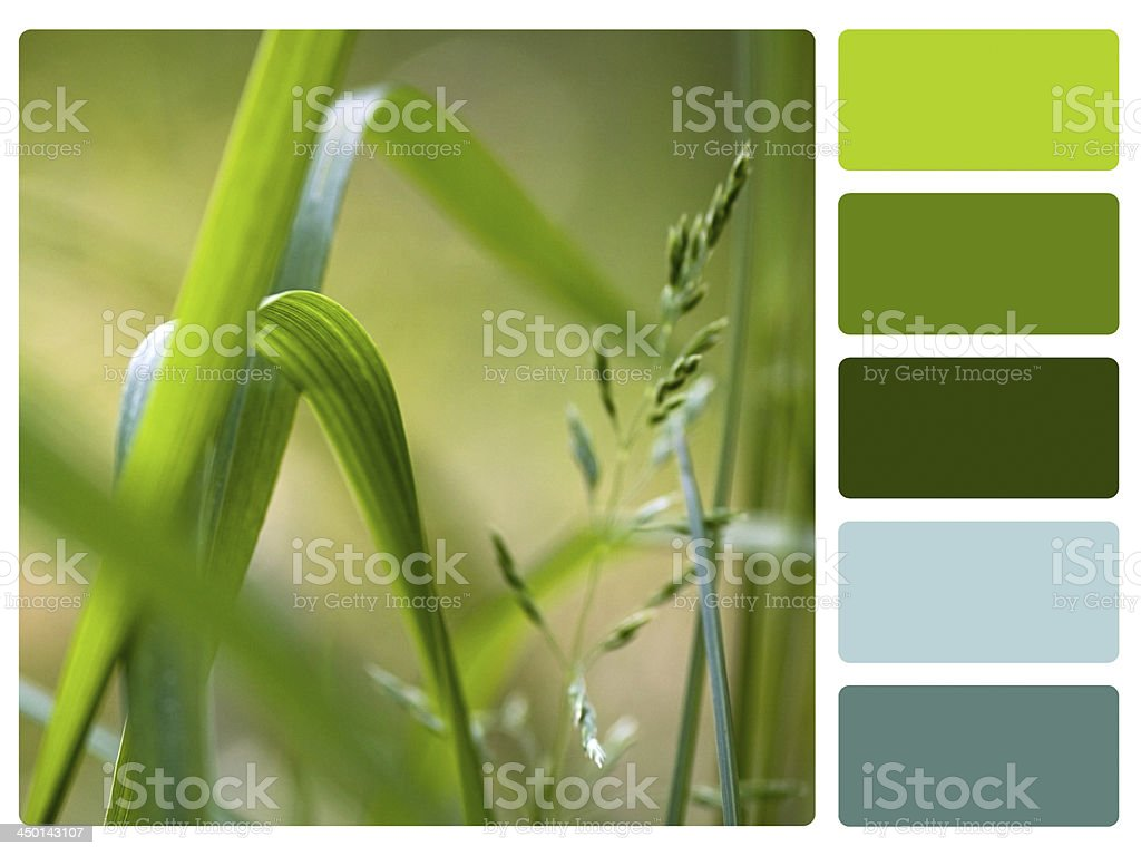 Green grass colour palette swatch royalty-free stock photo