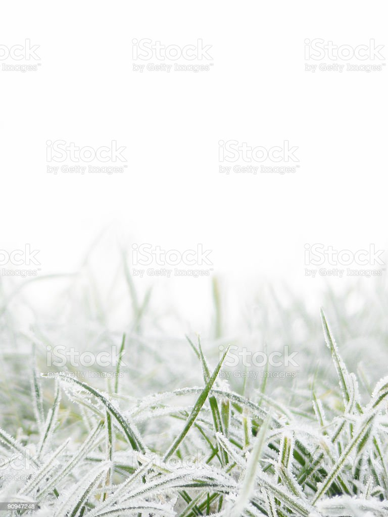 Green grass covered with clear frost particles stock photo