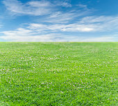 Green grass field and blue cloudy sky