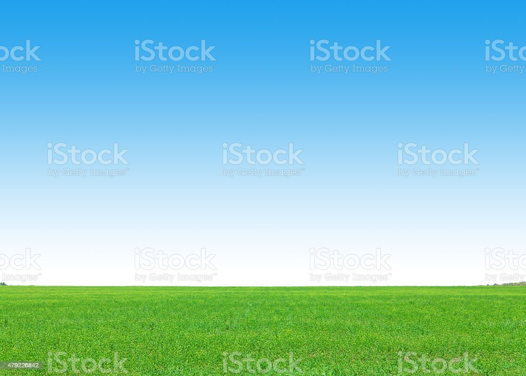 Green grass field and clear blue sky stock photo