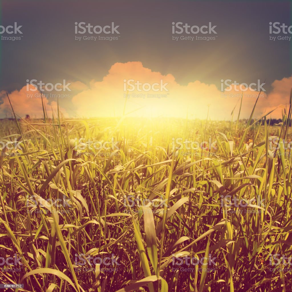 Green grass field at sunset. Vintage style. stock photo