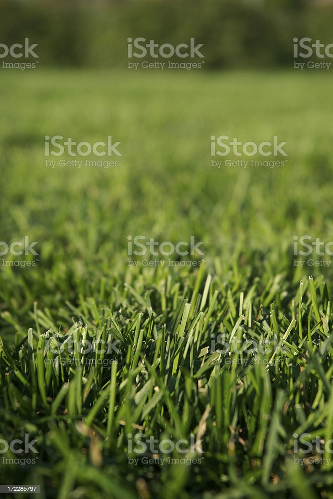 Green Grass Field Full Frame Vertical Selective Focus royalty-free stock photo