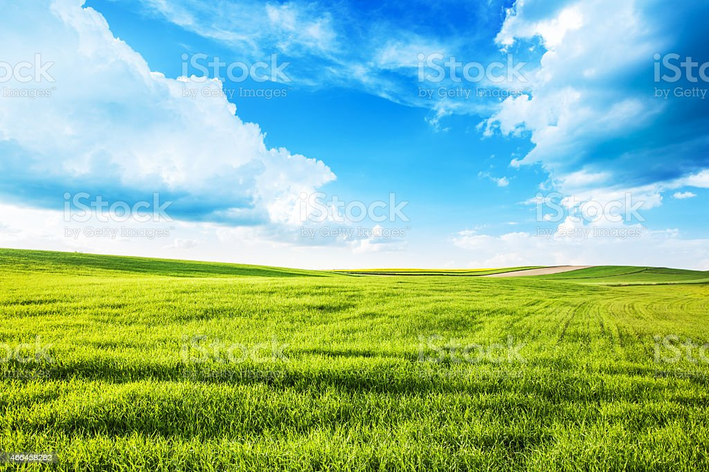 Green Grass, Field, Meadow - XXXL Summer Landscape stock photo
