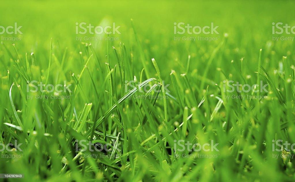 Green Grass Field stock photo