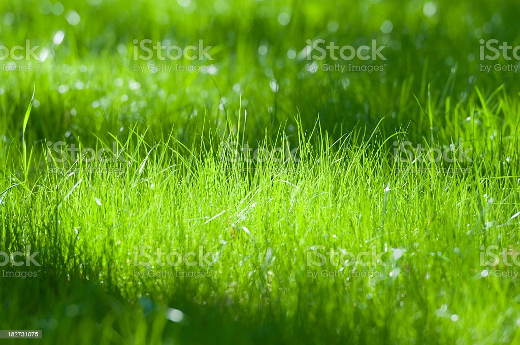 Green grass field royalty-free stock photo