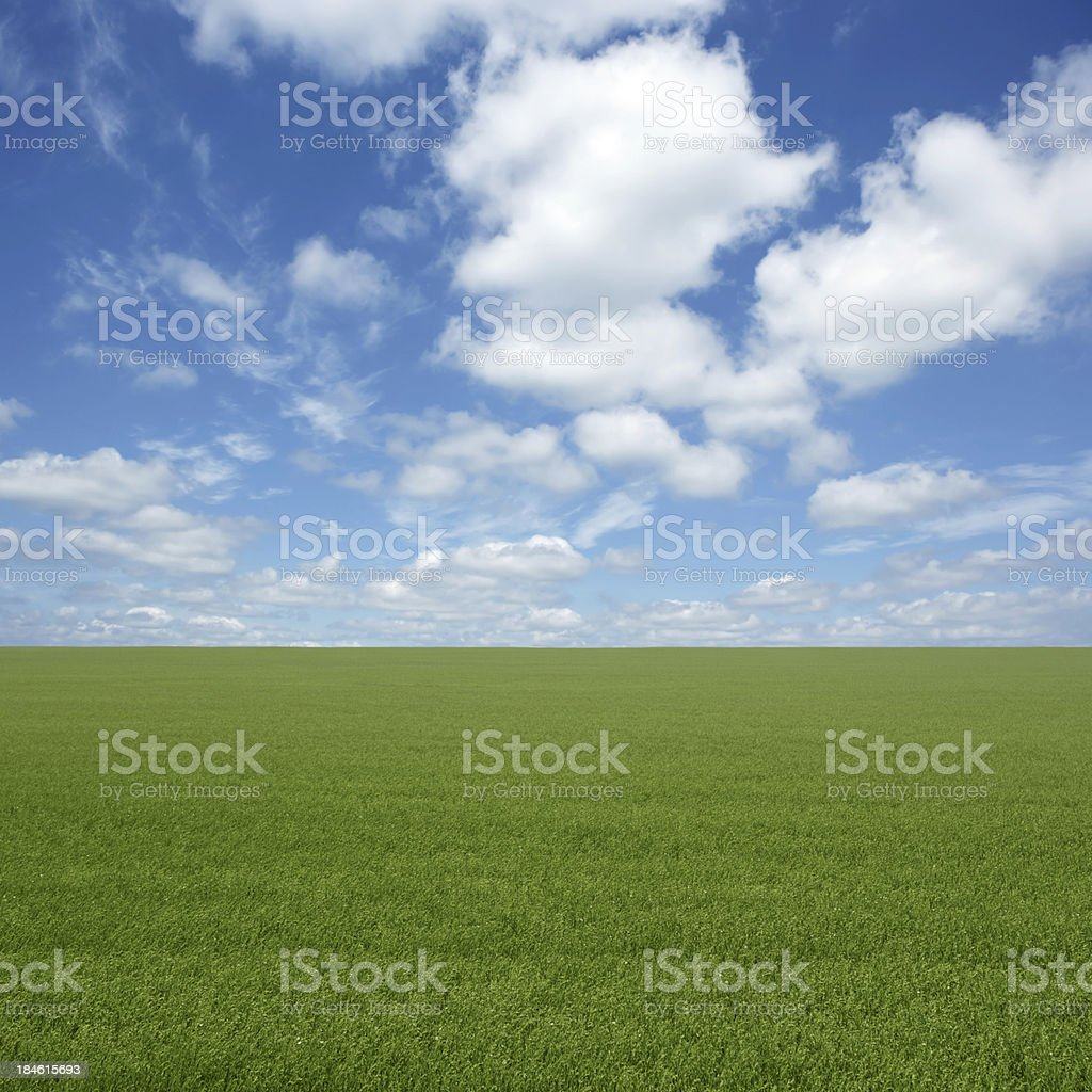 XXL green grass field royalty-free stock photo