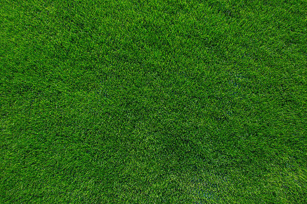 green lawn grass texture background green pictures images and