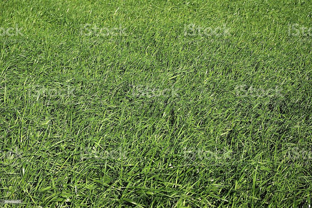 Green grass field royalty-free stock photo