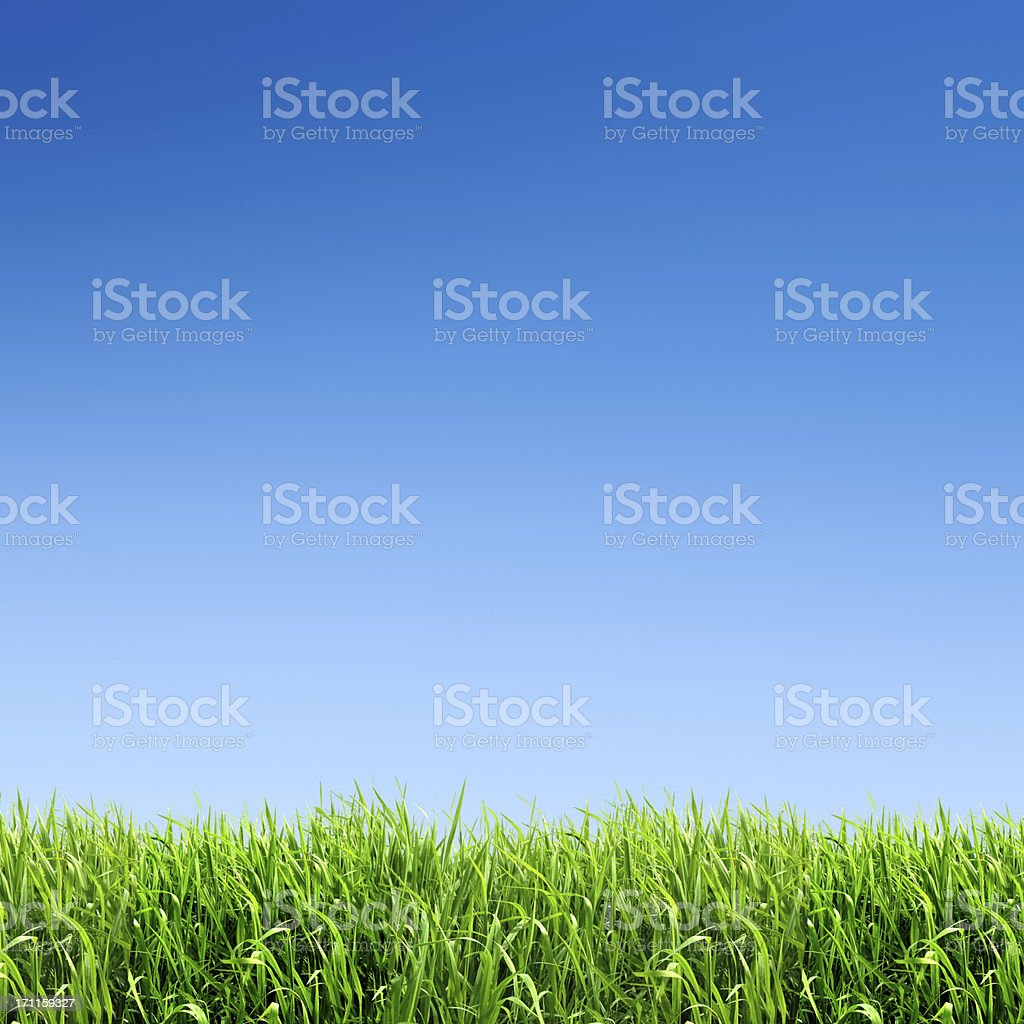 XXXL green grass field - with many copyspace stock photo