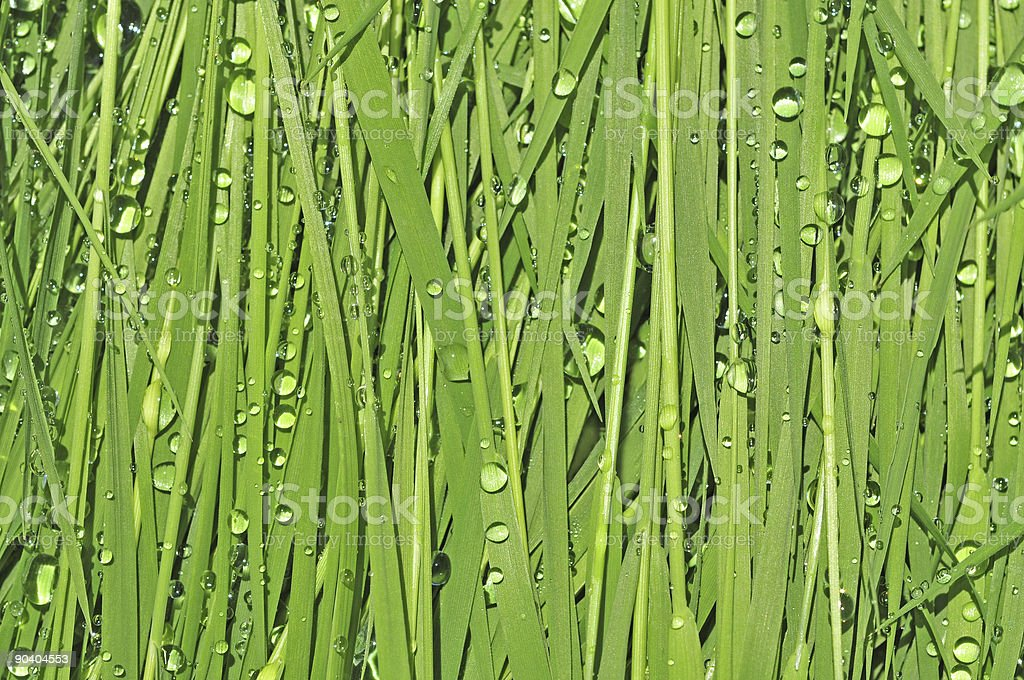 green grass floral background with droplets stock photo