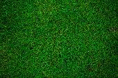 green grass football pitch