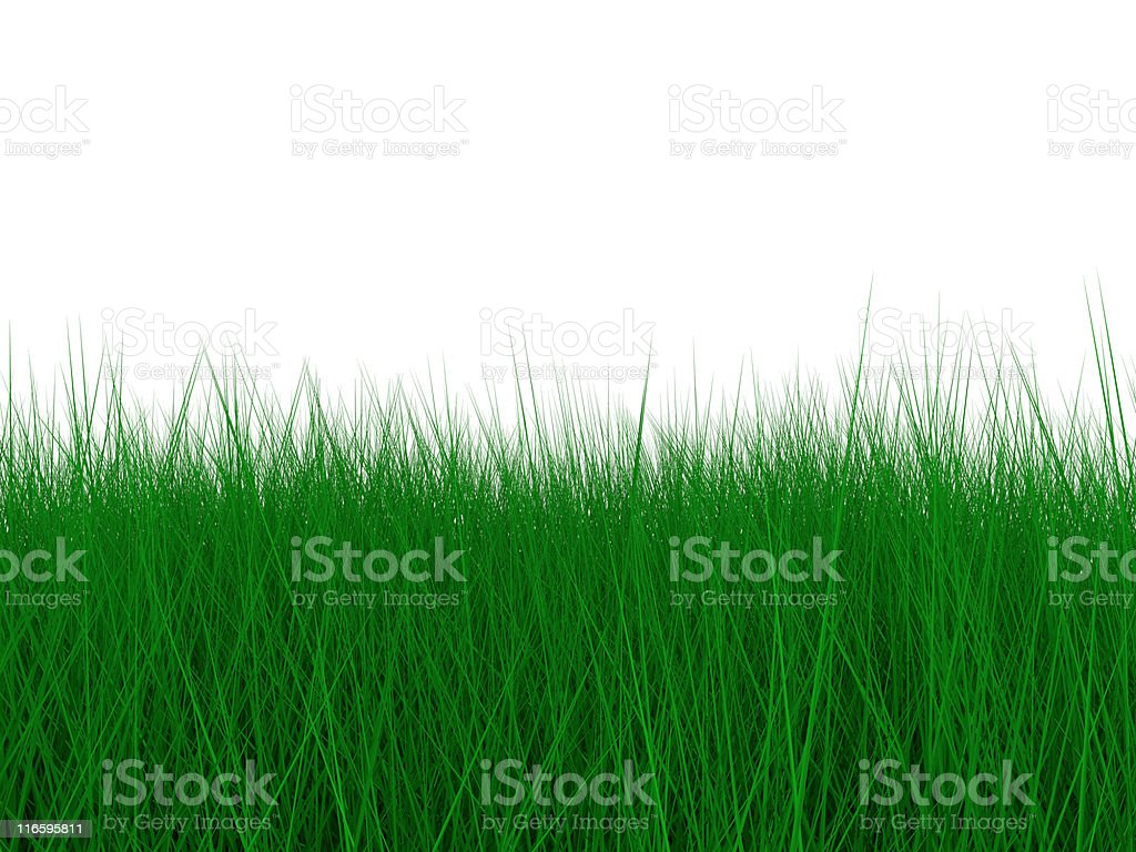 Green grass for background royalty-free stock photo
