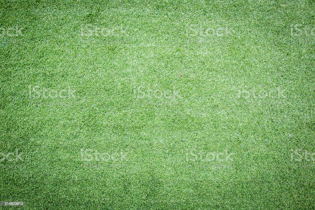 Green grass for background stock photo