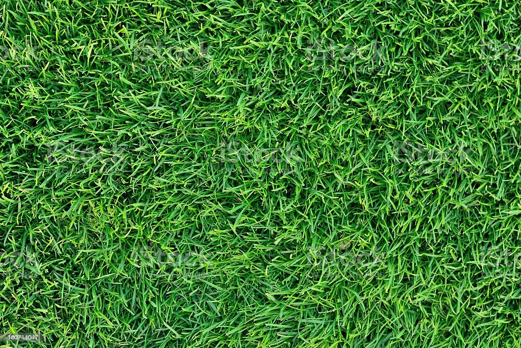 Green grass from top view royalty-free stock photo