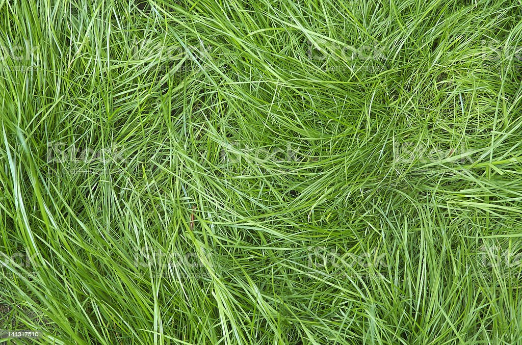 Green grass Glimmering royalty-free stock photo