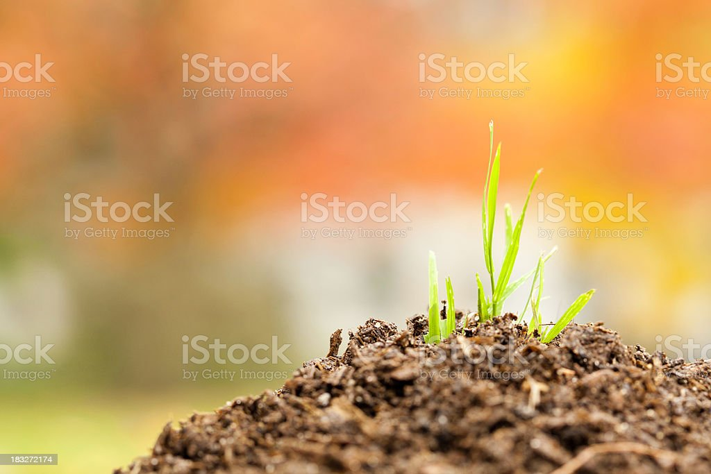 Green Grass Growing In Mound of Dirt royalty-free stock photo