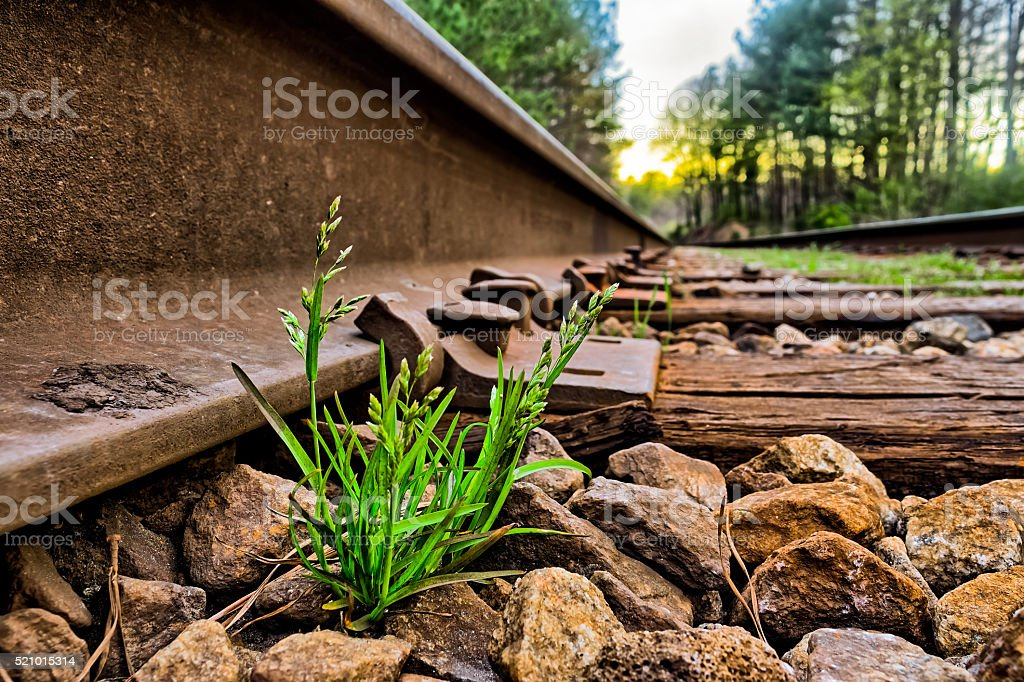 Green grass grows between rocks on rail road tracks stock photo