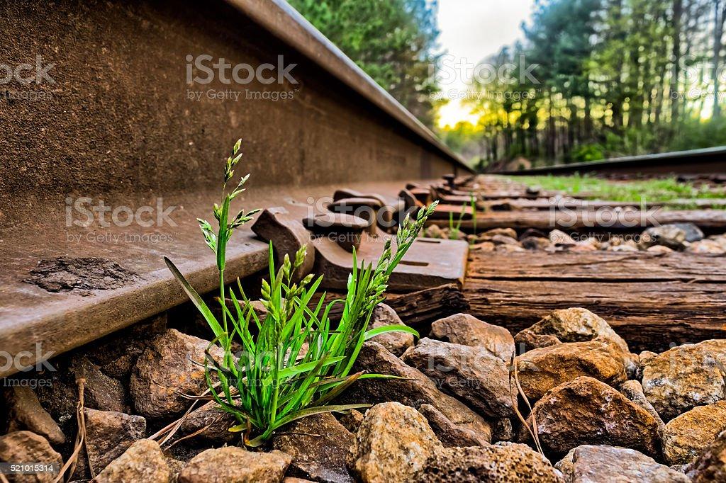 Green grass grows between rocks on rail road tracks stock photo